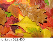 Купить «Осенняя палитра», фото № 522450, снято 11 октября 2008 г. (c) Кардаполова Наталья / Фотобанк Лори