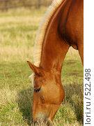 Конь на пастбище. Стоковое фото, фотограф Татьяна Тимофеева / Фотобанк Лори