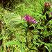 Бабочка лимонница среди травы, фото № 523062, снято 19 января 2017 г. (c) Вадим Кондратенков / Фотобанк Лори