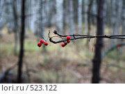 Красные ягоды на фоне осеннего леса. Стоковое фото, фотограф Игорь Гришаев / Фотобанк Лори