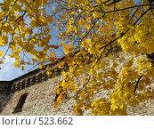 Купить «Жёлтый клён с памятными лентами во дворике Выборгского замка», фото № 523662, снято 5 октября 2008 г. (c) Светлана Кудрина / Фотобанк Лори
