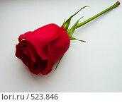 Одинокая роза. Стоковое фото, фотограф Марина Коваленко / Фотобанк Лори