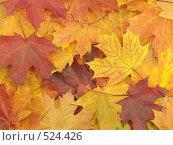 Купить «Фон с осенними листьями», фото № 524426, снято 12 октября 2008 г. (c) Александр Кузовлев / Фотобанк Лори
