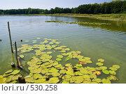 Купить «Озеро Островное», фото № 530258, снято 8 августа 2008 г. (c) Борис Панасюк / Фотобанк Лори