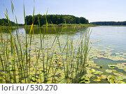 Купить «Озеро Островное», фото № 530270, снято 8 августа 2008 г. (c) Борис Панасюк / Фотобанк Лори