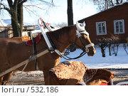 Купить «Конь в белых наушниках», фото № 532186, снято 27 января 2008 г. (c) Ольга Лерх Olga Lerkh / Фотобанк Лори