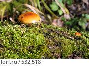 Грибы на замшелом дереве. Стоковое фото, фотограф Владимир Борисов / Фотобанк Лори