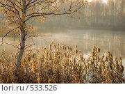 Купить «Осенний пейзаж», фото № 533526, снято 8 октября 2008 г. (c) Юрий Бельмесов / Фотобанк Лори