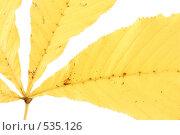 Сухой лист. Стоковое фото, фотограф Вячеслав Москалев / Фотобанк Лори