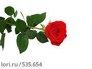 Красная роза. Стоковое фото, фотограф Алексей Хабазов / Фотобанк Лори