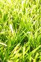 Трава, фото № 537542, снято 26 октября 2016 г. (c) Роман Сигаев / Фотобанк Лори