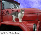 Купить «Сторожевой кот Васька», фото № 537662, снято 29 мая 2020 г. (c) Михаил Яковлев (ktynzq) / Фотобанк Лори