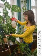 Купить «Девушка, опрыскивает диффенбахию», фото № 537702, снято 1 ноября 2008 г. (c) Ирина Солошенко / Фотобанк Лори