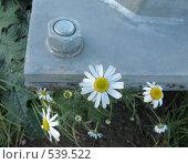 Купить «Болты и ромашки», фото № 539522, снято 2 ноября 2008 г. (c) Морковкин Терентий / Фотобанк Лори