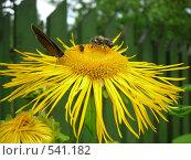 Купить «Тусовка на цветке», фото № 541182, снято 30 июня 2007 г. (c) Галина Гуреева / Фотобанк Лори