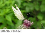 Бабочка. Стоковое фото, фотограф Наталья Волосевич / Фотобанк Лори