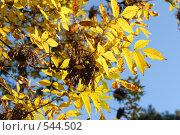 Осенние листья. Стоковое фото, фотограф Диана Иванкова / Фотобанк Лори