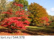 Купить «Разноцветная осень», фото № 544978, снято 27 октября 2008 г. (c) Максим Горпенюк / Фотобанк Лори