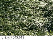 Купить «Трава после ливня», фото № 545618, снято 19 июня 2008 г. (c) Ханыкова Людмила / Фотобанк Лори