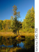 Купить «Остров на болоте», фото № 545750, снято 22 сентября 2007 г. (c) Юрий Беляков / Фотобанк Лори