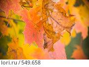 Осень. Стоковое фото, фотограф Ирина Чернявская / Фотобанк Лори