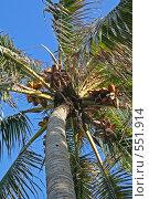 Пальма (2006 год). Стоковое фото, фотограф Денис Березин / Фотобанк Лори