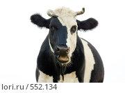 Корова на белом фоне. Стоковое фото, фотограф Александр Зайцев / Фотобанк Лори