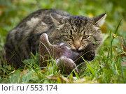 Купить «Хищник», фото № 553174, снято 7 января 2005 г. (c) Барабанов Максим Олегович / Фотобанк Лори