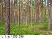 Лес. Стоковое фото, фотограф Алексей Лебедев / Фотобанк Лори