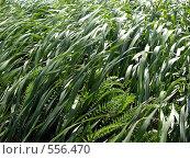 Свежая трава. Стоковое фото, фотограф Александр Кралин / Фотобанк Лори