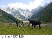 Купить «Кони в долине, Кавказ», фото № 557126, снято 8 августа 2008 г. (c) Vladimir Fedoroff / Фотобанк Лори