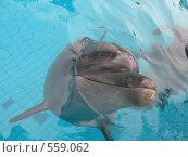 Дельфин. Стоковое фото, фотограф Ирина Китаева / Фотобанк Лори