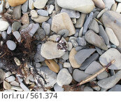 Купить «Камни», фото № 561374, снято 11 июня 2008 г. (c) Виктор  Батавин / Фотобанк Лори