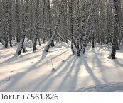 Тени в лесу. Стоковое фото, фотограф Андрей Сверкунов / Фотобанк Лори