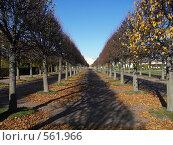 Купить «Аллея парка в Петергофе», фото № 561966, снято 8 октября 2008 г. (c) Александр Михалёв / Фотобанк Лори