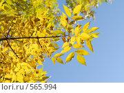 Осенний лист. Стоковое фото, фотограф Диана Иванкова / Фотобанк Лори