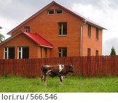 Купить «Бык», фото № 566546, снято 29 июня 2008 г. (c) Юлия Сайганова / Фотобанк Лори