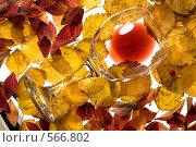 Купить «Бокал красного вина», фото № 566802, снято 17 сентября 2008 г. (c) Зайцева Ольга / Фотобанк Лори