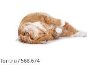 Купить «Рыжий кот», фото № 568674, снято 17 сентября 2008 г. (c) Cветлана Гладкова / Фотобанк Лори