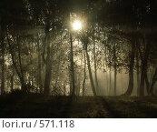 Солнце встало. Стоковое фото, фотограф Карина Латыпова / Фотобанк Лори