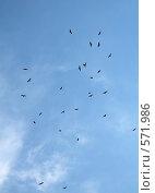 Купить «Стая птиц в небе», фото № 571986, снято 10 июля 2007 г. (c) vlntn / Фотобанк Лори