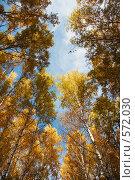 Осенняя высь. Стоковое фото, фотограф vlntn / Фотобанк Лори