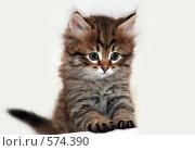 Купить «Полосатый пушистый котенок на белом фоне», фото № 574390, снято 18 января 2008 г. (c) Igor Lijashkov / Фотобанк Лори