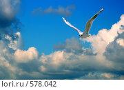 Купить «Чайка парит в облаках», фото № 578042, снято 3 марта 2008 г. (c) Сергей Литвиненко / Фотобанк Лори