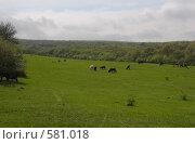 Купить «Коровы на весеннем горном лугу (Крымские горы)», фото № 581018, снято 28 апреля 2008 г. (c) Афонченков Игорь Николаевич / Фотобанк Лори