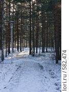Купить «Зимнее утро в парке», фото № 582474, снято 21 ноября 2008 г. (c) Ольга Хорькова / Фотобанк Лори