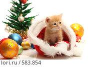 Купить «Маленький котенок и новогодние украшения», фото № 583854, снято 14 мая 2008 г. (c) Александр Паррус / Фотобанк Лори