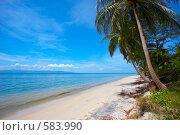 Купить «Тропический пляж», фото № 583990, снято 18 марта 2008 г. (c) Алексей Корсаков / Фотобанк Лори
