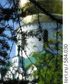 Купить «Ветви лиственницы на фоне собора во имя Феодоровской иконы Божией Матери (Лен. область, Царское Село)», фото № 584030, снято 15 августа 2018 г. (c) Андреев Александр / Фотобанк Лори