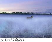 Лошадь в тумане. Стоковое фото, фотограф FieryLion / Фотобанк Лори